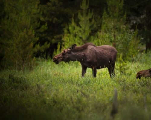 Bull Photo by Nathan Anderson