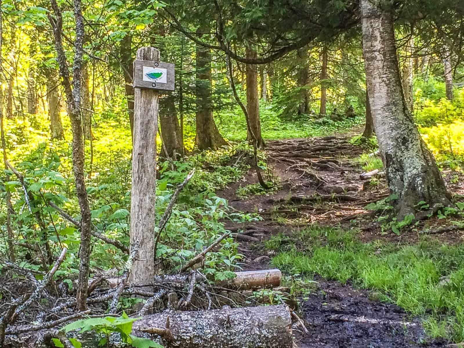 Superior Hiking Trail and Ski Trails at Cascade River State Park