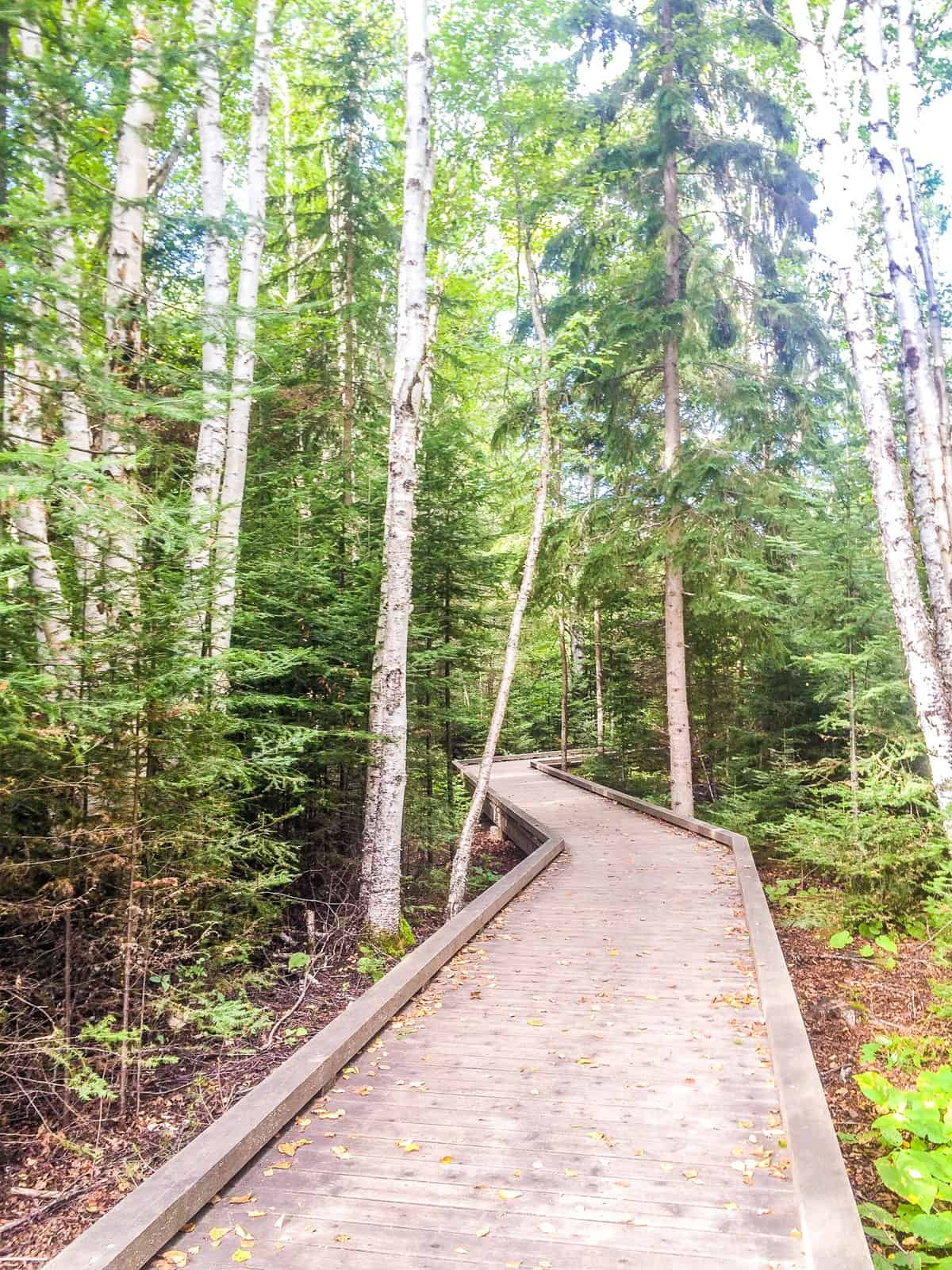Accessible Hiking Trails at Grand Portage State Park