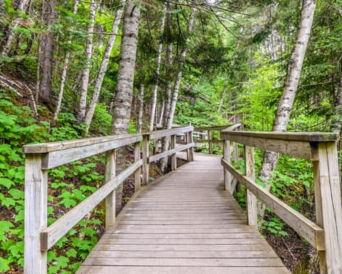 Boardwalk on Hiking Trail at Jduge CR Magney State Park