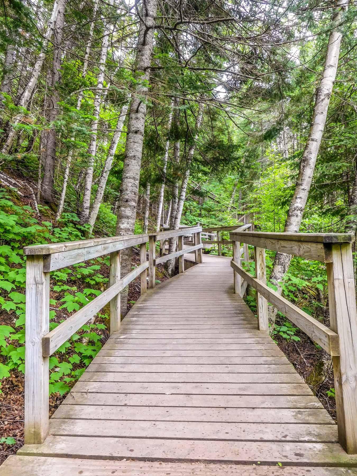 Boardwalk on Hiking Trail at Jduge CR Magney State Park