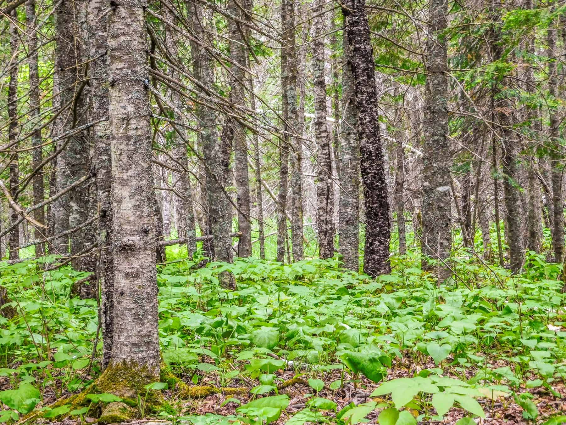 Be surrounded by mature trees at the Judge CR Magney State Park