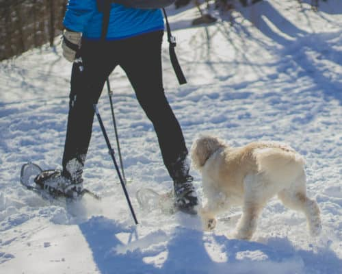 Even four-legged members of the family enjoy a good snowshoeing adventure!