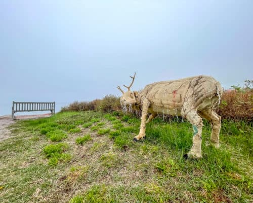 The caribou are life-sized replicas of wild caribou that once roamed here.